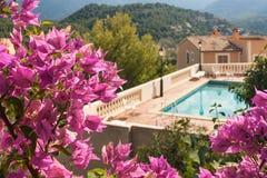 Fleurs de bouganvillée avec la piscine Image libre de droits