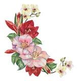 Fleurs de bouquet avec Amaryllis Coin floral d'illustration Illustration Libre de Droits