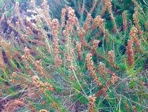 Fleurs de Brown dans le jardin Photo libre de droits