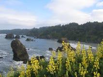 Fleurs de côte de Pacifici Photos libres de droits