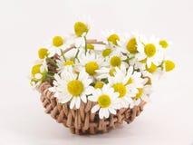 Fleurs de camomille Image stock