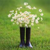 Fleurs de camomille dans des bottes en caoutchouc noires image libre de droits