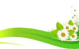 Fleurs de camomille dans l'illustration d'herbe verte Images stock