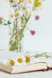 Fleurs de camomille dans le livre ouvert Images stock