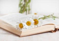 Fleurs de camomille dans le livre ouvert Image stock