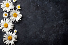 Fleurs de camomille de jardin au-dessus de pierre Photos libres de droits