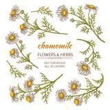 Fleurs de camomille réglées Photo stock