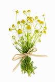Fleurs de camomille sur le blanc Photos libres de droits