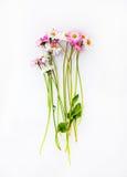 Fleurs de camomille sur le gris Image libre de droits