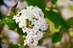 Fleurs de campagne Photos libres de droits