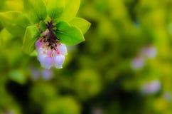 Fleurs de campanule Photo stock