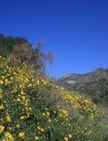 Fleurs de canyon d'Eaton Photos libres de droits