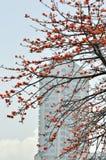 Fleurs de capoc de ville Image libre de droits