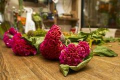 Fleurs de cellosia sur une table en bois dans un fleuriste Images libres de droits