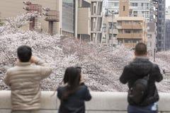 Fleurs de cerise à Tokyo photos libres de droits