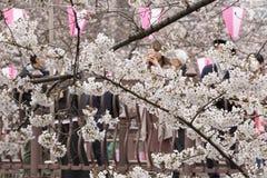 Fleurs de cerise à Tokyo images stock
