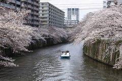 Fleurs de cerise à Tokyo photos stock