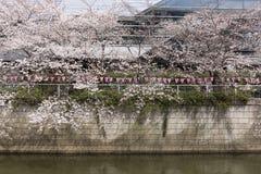 Fleurs de cerise à Tokyo photo libre de droits