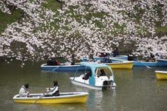 Fleurs de cerise à Tokyo image libre de droits