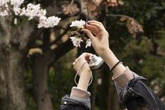 Fleurs de cerise à Tokyo photographie stock