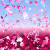 Fleurs de cerise illustration de vecteur