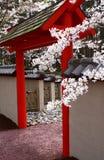 Fleurs de cerise au-dessus d'une pagoda Photos stock