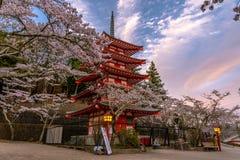Fleurs de cerise au Japon photos libres de droits