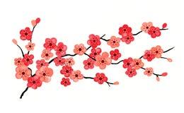 Fleurs de cerise d'isolement Image libre de droits