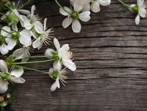 Fleurs de cerise de fleur de source Images libres de droits