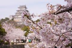 Fleurs de cerise de Sakura autour de château Image libre de droits