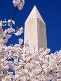 Fleurs de cerise et monument roses 2010 de Washington Photographie stock libre de droits