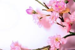 Fleurs de cerise roses Photo libre de droits