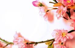 Fleurs de cerise roses Image libre de droits