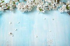 Fleurs de cerise sur le conseil en bois Images stock