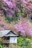 Fleurs de cerisier Image libre de droits