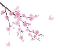 Fleurs de cerisier illustration libre de droits