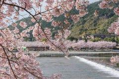 Fleurs de cerisier, Arashiyama au printemps, Kyoto, Japon Photographie stock libre de droits