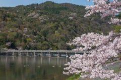 Fleurs de cerisier, Arashiyama au printemps, Kyoto, Japon Photos stock