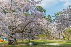 Fleurs de cerisier au château de Hirosaki photo stock
