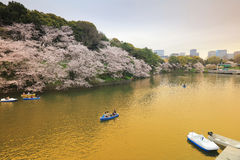 fleurs de cerisier au chidorigafuchi Tokyo images libres de droits
