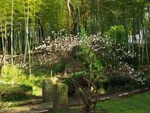 Fleurs de cerisier au parc de château Photos stock