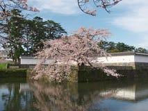 Fleurs de cerisier au parc de château Photo stock