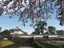 Fleurs de cerisier au parc de château Image stock