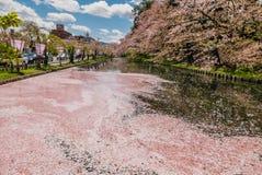 Fleurs de cerisier au parc de château de Hirosaki Photo libre de droits