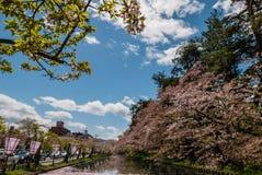 Fleurs de cerisier au parc de château de Hirosaki Image libre de droits