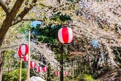 Fleurs de cerisier au parc de château de Hirosaki Images libres de droits