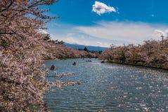 Fleurs de cerisier au parc de château de Hirosaki Photographie stock libre de droits