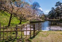 Fleurs de cerisier au parc de château de Hirosaki Image stock