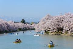 Fleurs de cerisier au parc de Hirosaki photos stock