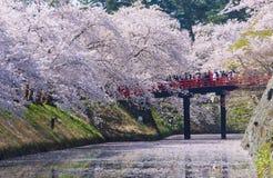 Fleurs de cerisier au parc de Hirosaki Image stock